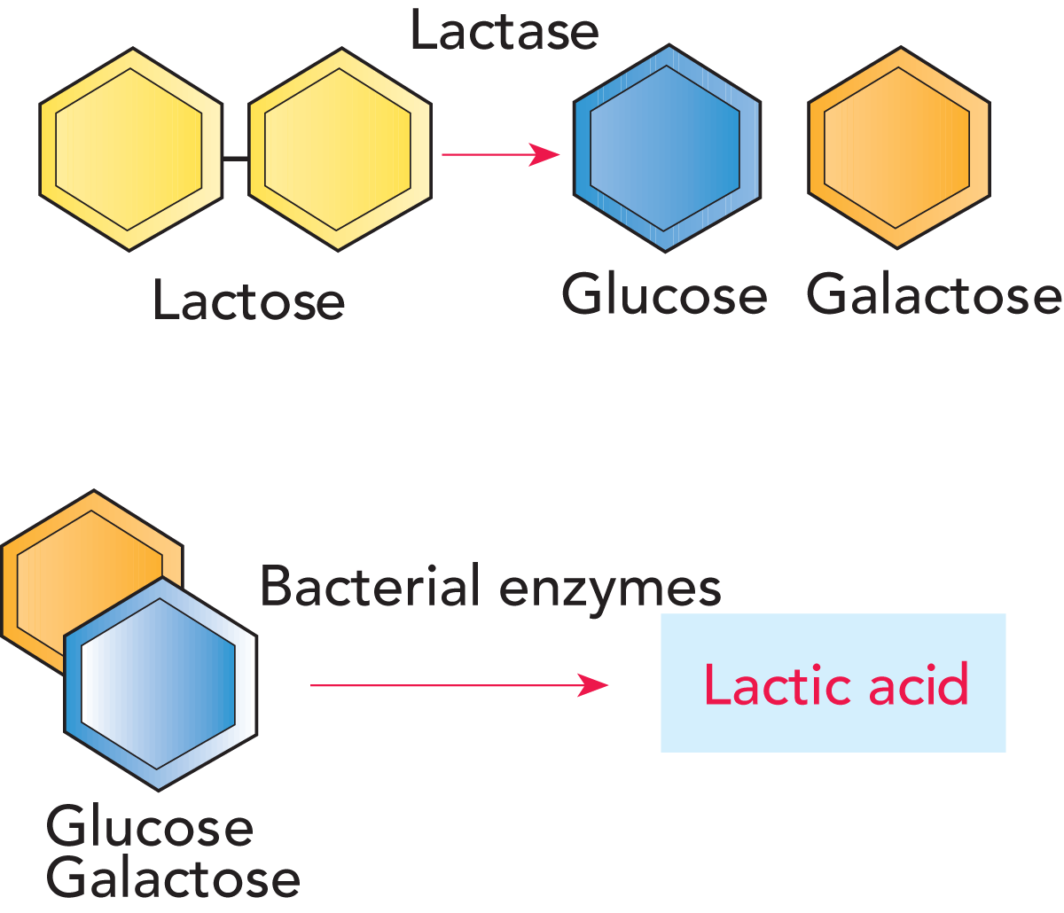 The Chemistry Of Milk Dairy Processing Handbook Parts Can Be Identified Through Formula Shown In Diagram Fig 242 Breakdown Lactose By