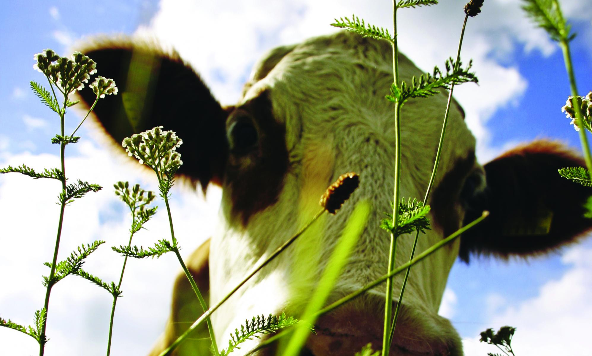 PRIMARY PRODUCTION OF MILK | Dairy Processing Handbook