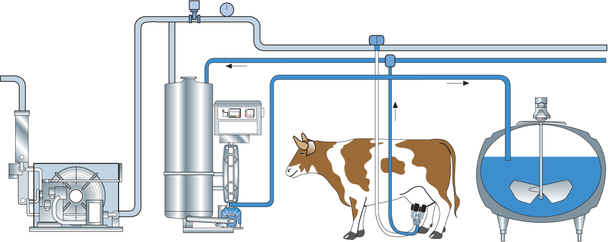 diagram of cow milk wiring diagram online Graphs of Cows collection and reception of milk dairy processing handbook parts of cow diagram of cow milk