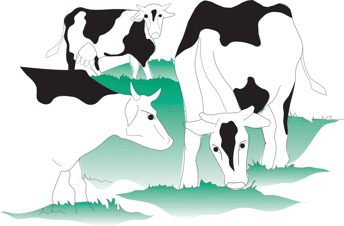 PRIMARY PRODUCTION OF MILK | Dairy Processing Handbook